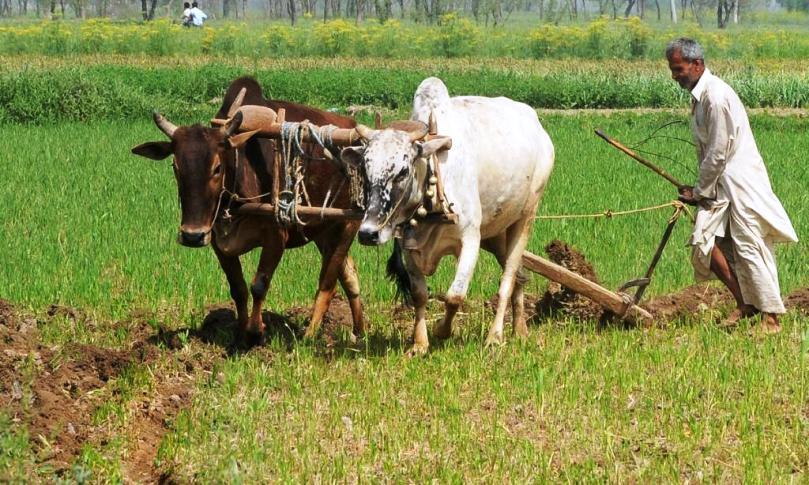 भाजपा का किसान आंदोलन को लेकर जिलाध्यक्ष डॉ रश्मि चंद्रकार की तीखी प्रतिक्रिया