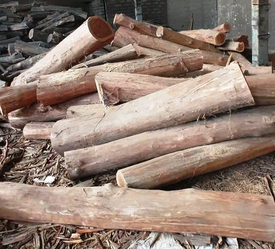 गोदाम में अवैध रूप से संग्रहित 30 लाख रूपए से अधिक मूल्य के लकड़ी की जप्त