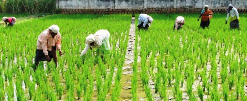 किसानों को लाभदायी खेती में मिलेगी मदद,चिराग परियोजना के लिए हुआ एमओयू