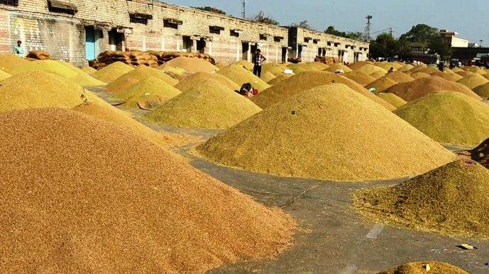 धान की समर्थन मूल्य बढ़ी,किसानों को होगा इससे फायदा- अमृता चन्द्राकर