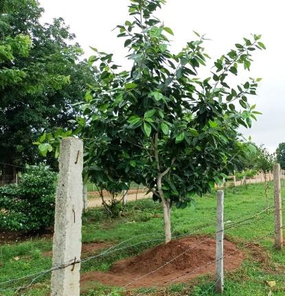 ग्रामीण क़ृषि साख सहकारी समिति चरौदा के प्रबंधक द्वारा एक अनुकरणीय पहल