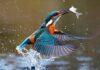 पर्यटकों को लुभाते हैं 165 प्रकार के विभिन्न दुर्लभ पक्षियों का नौरादेही अभ्यारण